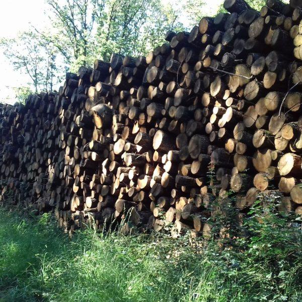 site internet pour revendeur de combustible bois dans la Vienne