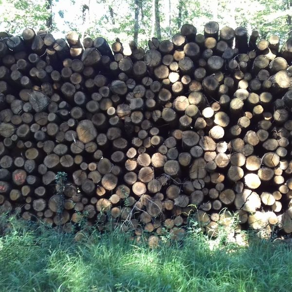 site internet pour revendeur de combustible bois dans l'Essonne
