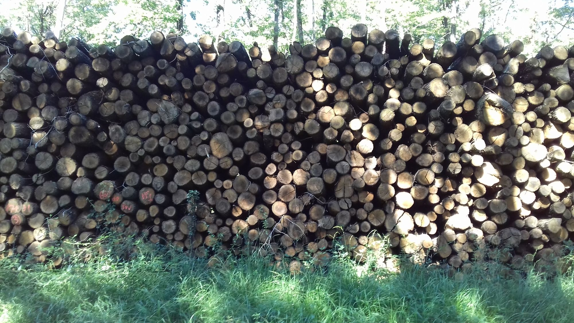 site internet pour revendeur de combustible bois dans l'Essonnesite internet pour revendeur de combustible bois dans l'Essonne