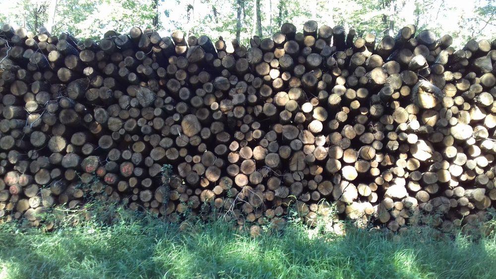 site internet pour revendeur de combustible bois dans le Tarn-et-Garonne