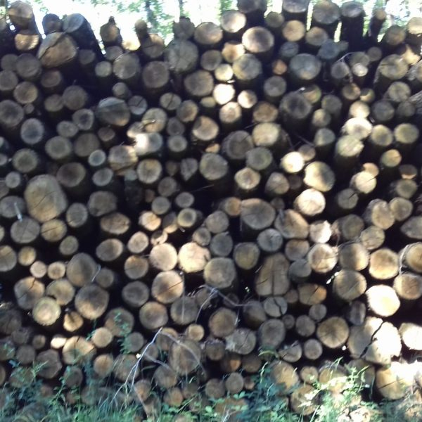 site internet pour revendeur de combustible bois dans la Haute-Loire