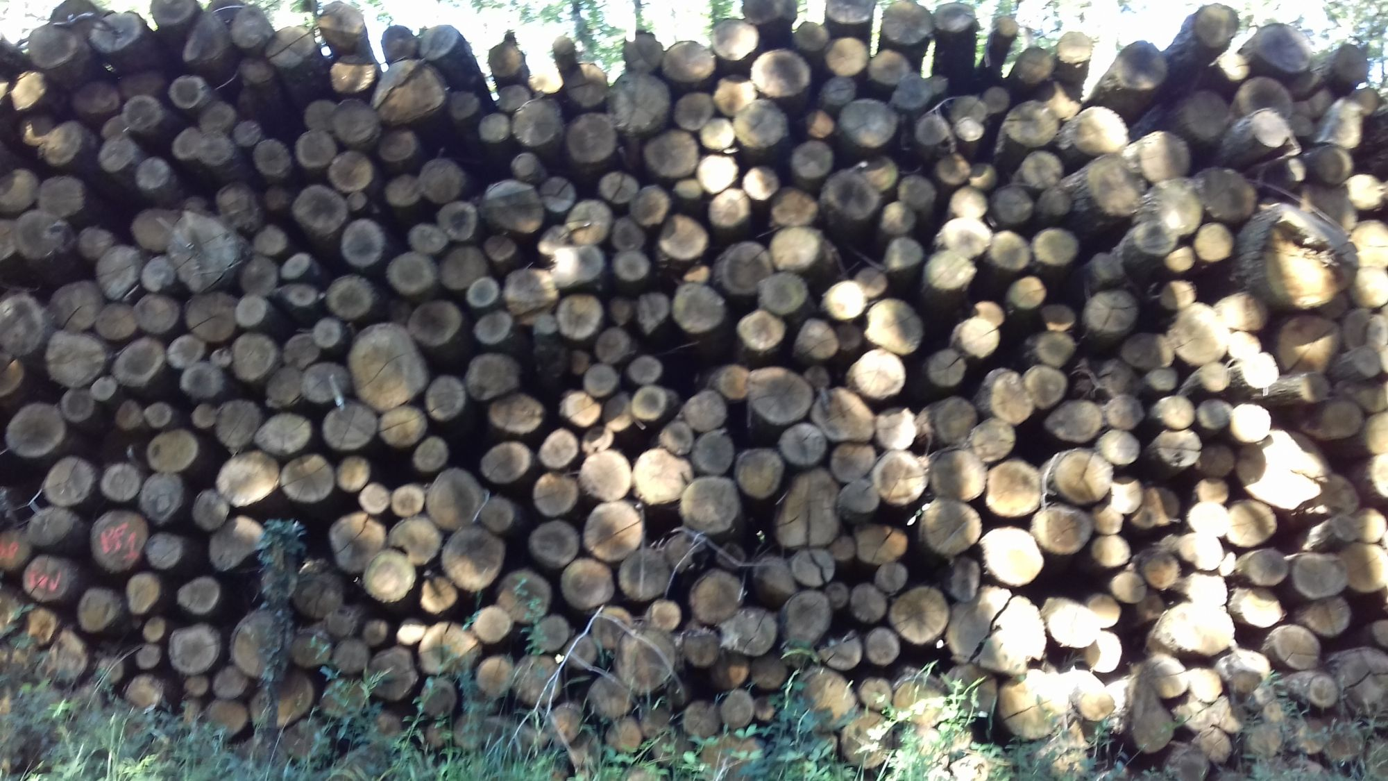 boisdechauffage43.frsite internet pour revendeur de combustible bois dans la Haute-Loire