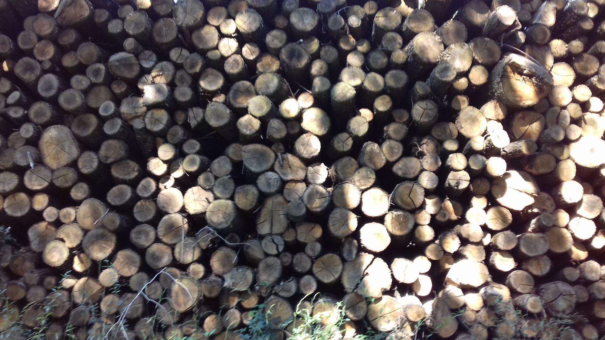 site internet pour revendeur de combustible bois dans le Tarn