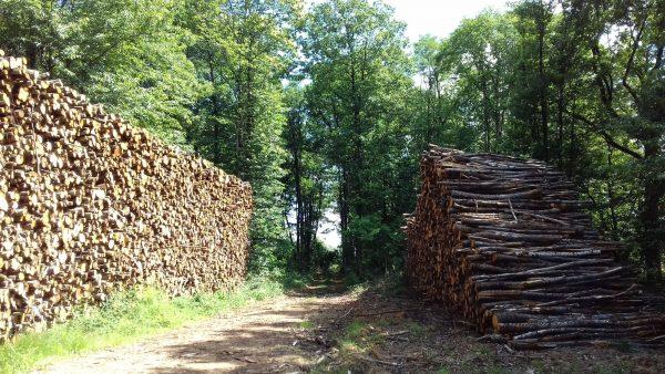 Site internet pour revendeur de combustible bois dans la Gironde