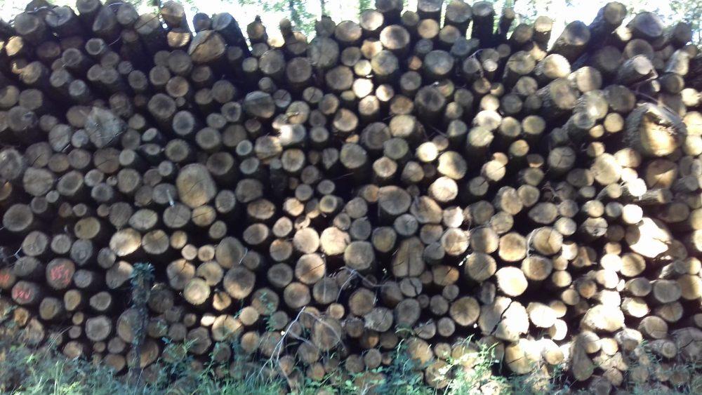 bois de chauffage 09
