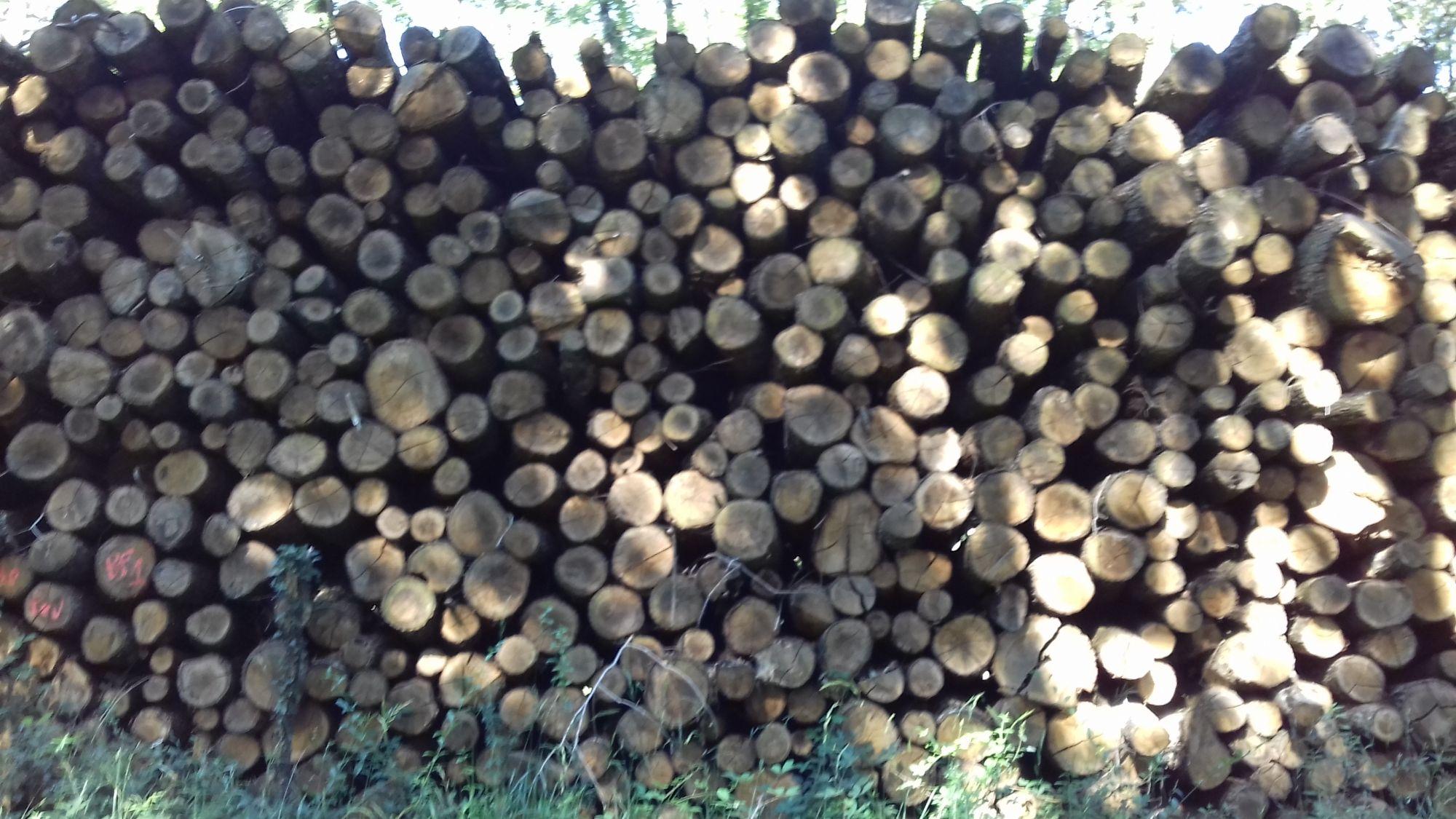 bois de chauffage 13site internet pour revendeur de combustible bois dans les Bouches-du-Rhône