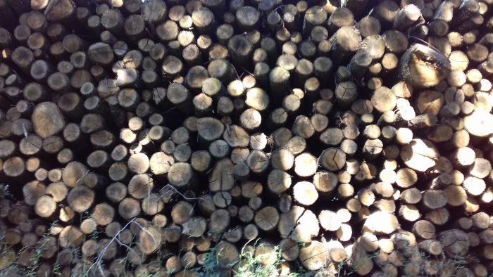 site internet pour revendeur de combustible bois dans le Cantal