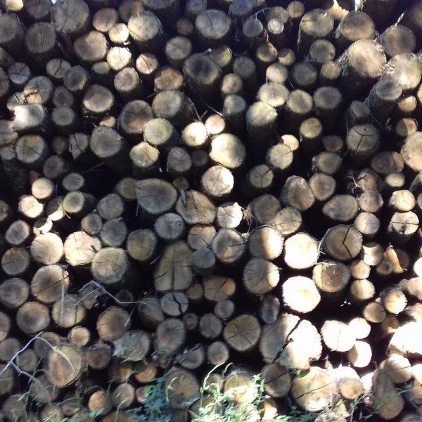 site internet pour revendeur de combustible bois dans les Alpes-Maritimes