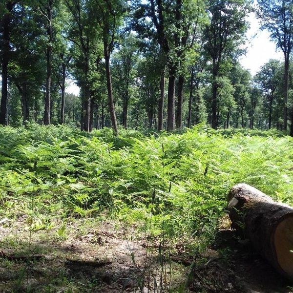 Site internet pour revendeur de combustible bois dans la Haute-Savoie