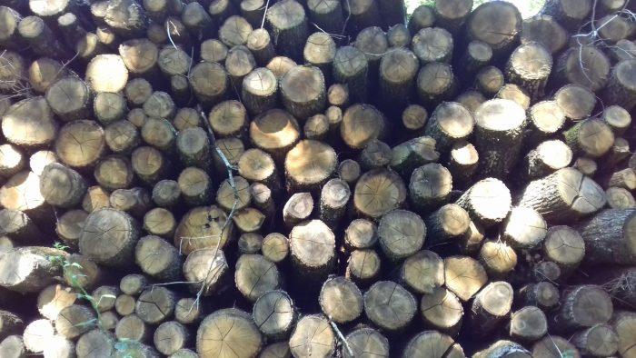bois de chauffage Loiret