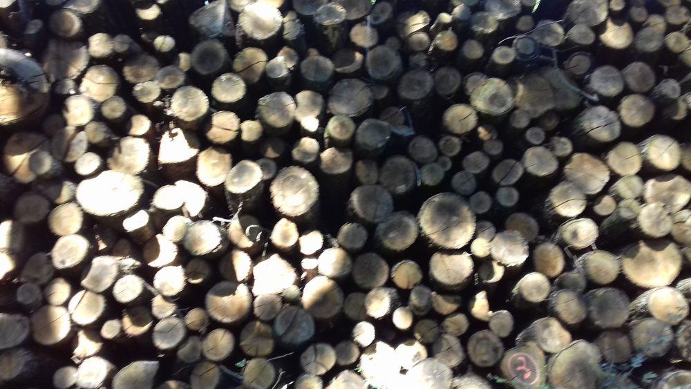 bois de chauffage 31
