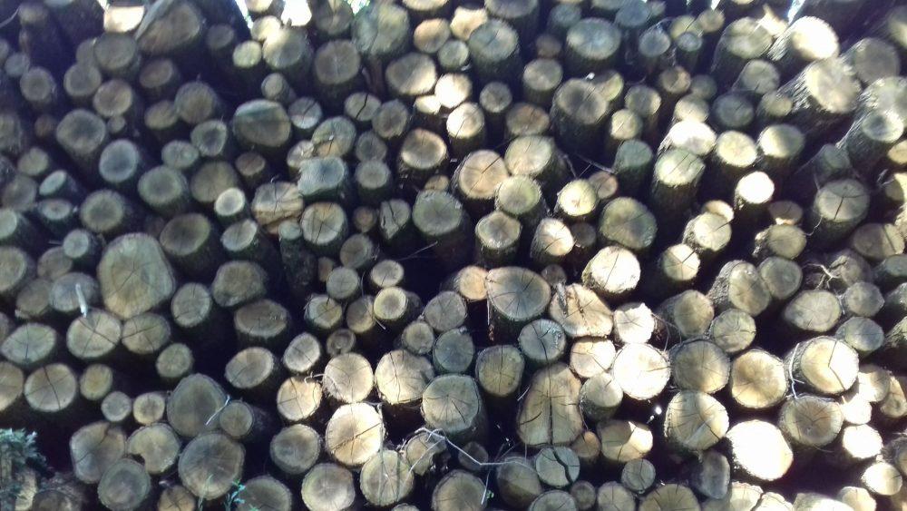 bois de chauffage 30