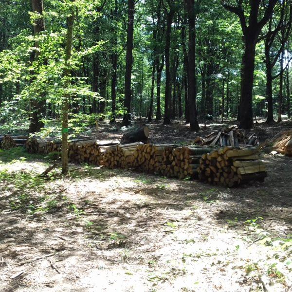 Site internet pour revendeur de combustible bois dans la Marne