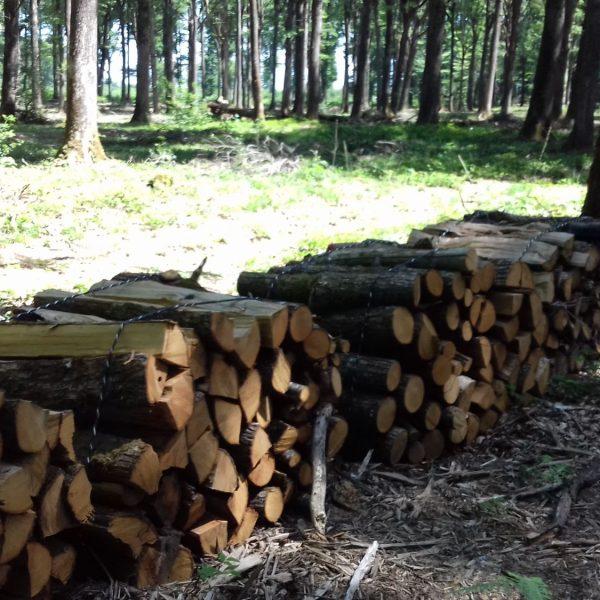 Site internet pour revendeur de combustible bois dans la Haute-Marne