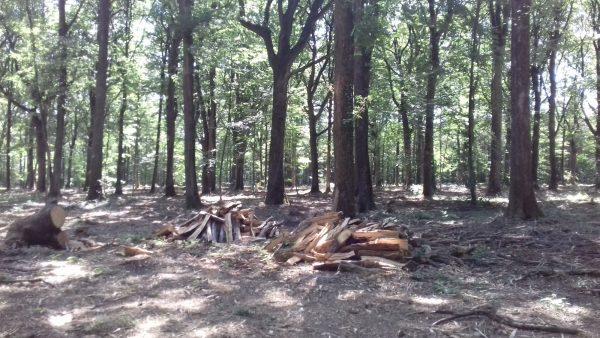 Site internet pour revendeur de combustible bois dans les Landes