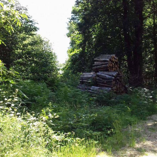 Site internet pour revendeur de combustible bois dans la Meurthe-et-Moselle