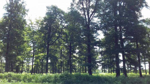 Site internet pour revendeur de combustible bois dans les Hautes-Pyrénées
