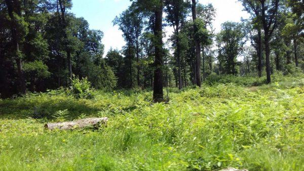 Site internet pour revendeur de combustible bois dans l'Hérault