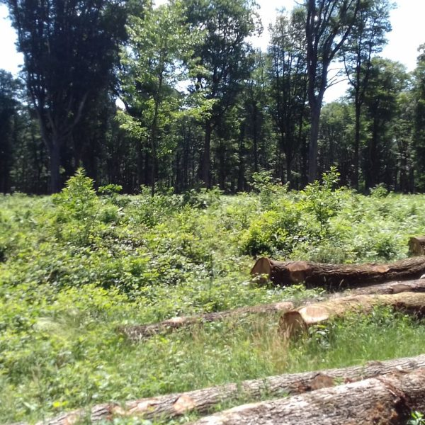 Site internet pour revendeur de combustible bois dans les Pyrénées-Orientales