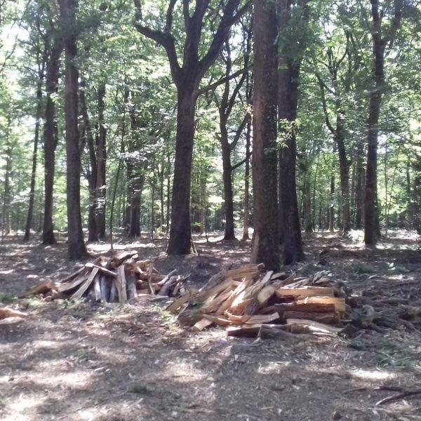 Site internet pour revendeur de combustible bois dans l'Eure-et-Loir