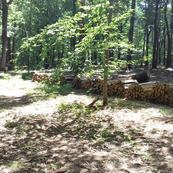 Site internet pour revendeur de combustible bois dans le Lot