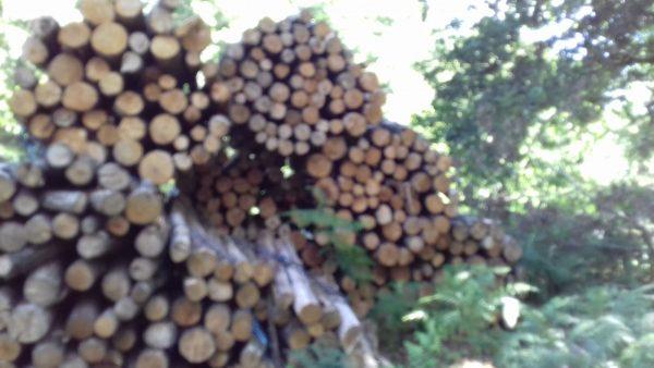 Site internet pour revendeur de combustible bois dans le Maine-et-Loire