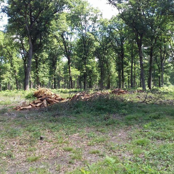 Site internet pour revendeur de combustible bois dans la Moselle