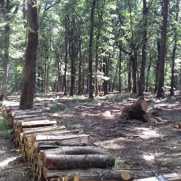 Site internet pour revendeur de combustible bois dans la Meuse