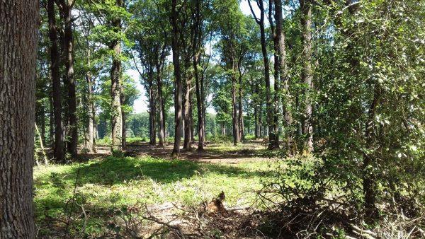 Site internet pour revendeur de combustible bois dans le Nord