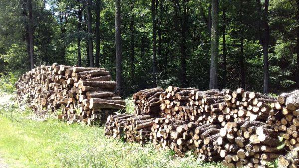 Site internet pour revendeur de combustible bois dans le Puy-de-Dôme