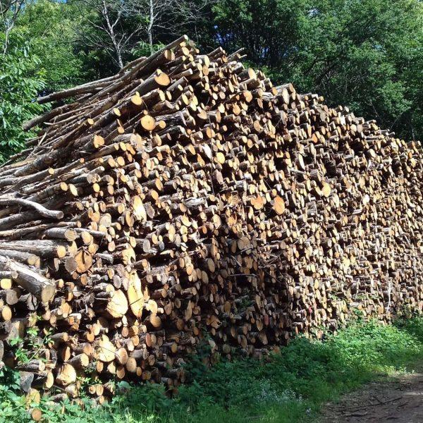 Site internet pour revendeur de combustible bois dans les Yvelines