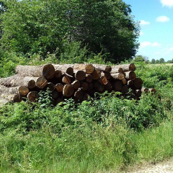Site internet pour revendeur de combustible bois dans l'Oise