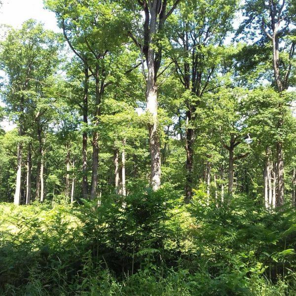 Site internet pour revendeur de combustible bois dans l'Isère